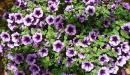 أنواع نباتات الظل وأسماؤها