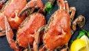 فوائد سرطان البحر للجنس: فوائد مزعومة أم صحيحة علميًّا؟