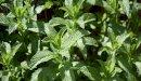 علاج الزائدة الدودية بالأعشاب: حقيقة أم خرافة قد تضرك؟