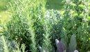 علاج الحزام الناري بالأعشاب: حقيقة أم خرافة قد تضرك؟