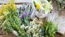 علاج الاكتئاب بالأعشاب: حقيقة أم خرافة قد تضرك؟