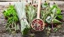هل يوجد علاج للروماتيزم بالأعشاب؟ وما رأي العلم؟