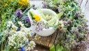 علاج مرض السكر بالأعشاب: ما بين الخرافات والحقائق