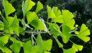 علاج التهاب الأعصاب بالأعشاب: حقيقة أم خرافة قد تضرك؟