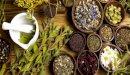 علاج السالمونيلا بالأعشاب: حقيقة أم خرافة قد تضرك؟