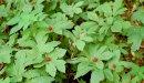 علاج الكلاميديا بالأعشاب: حقيقة أم خرافة قد تضرك؟