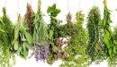 طرق علاج حموضة الدم بالأعشاب: حقيقة أم خرافة قد تضرك؟