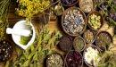 علاج أمراض القلب بالأعشاب: حقيقة أم خرافة قد تضرك؟