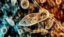 تعريف الميكروبات