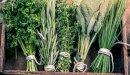 علاج سرطان الرئة بالأعشاب: حقيقة أم خرافة قد تضرك؟
