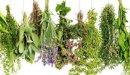 علاج ارتفاع هرمون الأستروجين بالأعشاب: ما مدى صحة هذا الاعتقاد؟