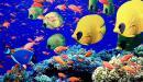 أنواع الأسماك البحرية