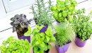 الأعشاب والوزن: رأي العلم ودحض لكثير من الخرافات
