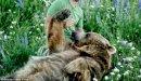 الهضم عند الإنسان والحيوان والنبات: العوامل المشتركة ونقاط الاختلاف