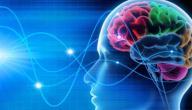 اللغات و دماغ الإنسان