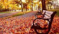 كيف يؤثر الخريف على الصحة