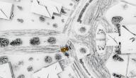نصائح ليلعب الأطفال بأمان في الثلج