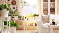 فوائد بعض النباتات المنزلية