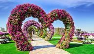 الحديقة المعجزة في دبي (Dubai Miracle Garden)