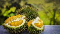 فاكهة الدوريان Durian