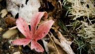 ما هي الدروس المستفادة من فصل الربيع؟