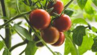 ما هي الأطعمة المعلبة التي يمكن تناولها