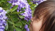 زهور تشبه في رائحتها رائحة الحلوى