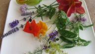 نباتات زينة يمكن أكلها