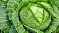 الفوائد الصحية لنبات الكرنب
