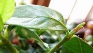 علاجات طبيعية لنباتات منزلية خالية من الآفات