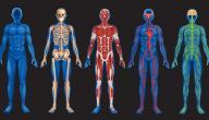 حقائق قد لا تعرفها عن جسم الإنسان