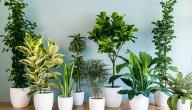 أفضل نباتات الزينة لتنقية الهواء في الغرف