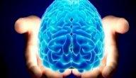 ثمانية حقائق مفاجئة عن الدماغ