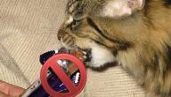 أطعمة غير مناسبة للقطط