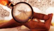 مرض حمى الضنك و أعراضه