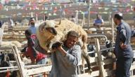 تقاليد عيد الأضحى في مصر