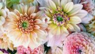 معاني ألوان الورود في عيد الحب