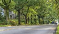 لماذا العيش بالقرب من الأشجار مفيد لصحتك