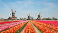 معلومات عامة عن دولة هولندا