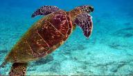 ماذا تأكل السلاحف المائية ؟