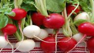 ما هو الفرق بين الفجل الأحمر والأبيض