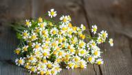 علاج الشقيقة بالأعشاب: حقيقة أم خرافة قد تضرك؟