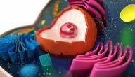 ما هي مكونات الخلية الحيوانية