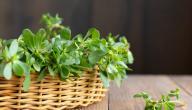 هل يوجد علاج لتكيس المبايض بالأعشاب؟ وما رأي العلم؟