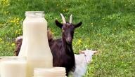 فوائد حليب الماعز للبشرة