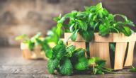علاج التهاب المثانة العصبية بالأعشاب: حقيقة أم خرافة قد تضرك؟