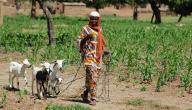 أسباب وأعراض حمى الوادي المتصدع