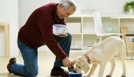 حكم تربية الكلاب