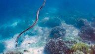 معلومات عن ثعبان البحر