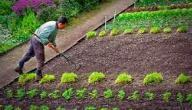 طرق حماية التربة من الإنجراف